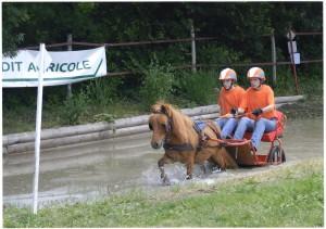 Championnats de France de TREC attelé. Juin 2008