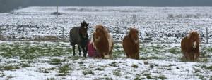Jeux de poneys dans la neige, hiver 2013
