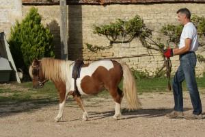 Belle attitude du poney et de son meneur : guides tendues et poney en avant