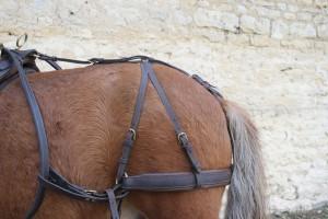 l'appareil de reculement (croupière, barre de fesses et avaloire) vient au contact de l'arrière main