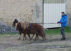 Le poney de droite se déplace plus vite que celui de gauche