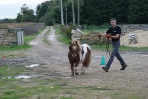 Très belle incurvation du poney, avec action du fouet pour l'arrondir sur sa courbe.