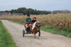 Détente active du poney sur le chemin menant à la route