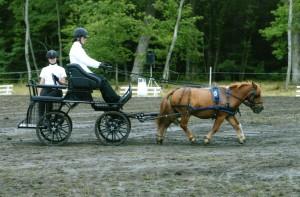 Les poneys sont tellement bien ensemble, que Poye qui est pourtant plus long qu'Ernest de 10 cm, disparait complètement derrière ce dernier !!