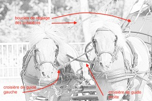 Schéma explicatif des croisières
