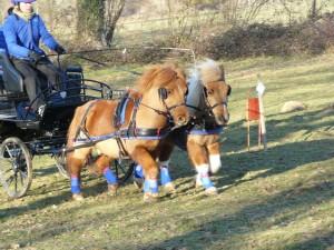 paire de poney au galop