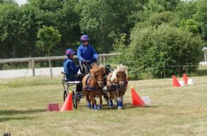 épreuve de maniabilité (avec une paire de poneys)