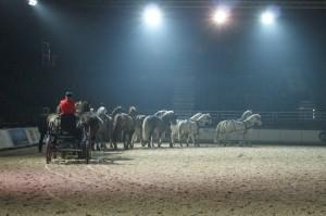 Le rébus est en marche, Louis Basty aux guides des 14 chevaux.