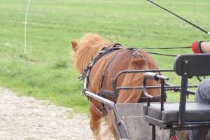 poney attelé en solo