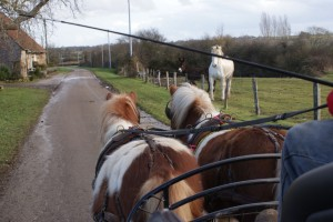 Petits poneys au travail sur une route de campagne