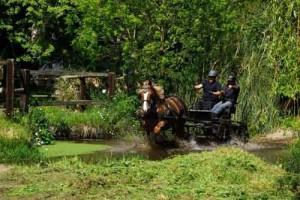 cheval attelé dans un gué