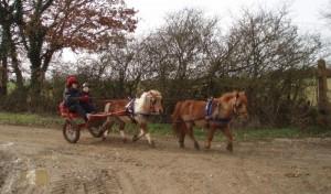 poneys en tandem, l'un derrière l'autre