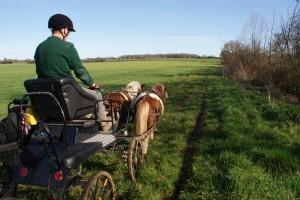 poneys et voiture d'attelage