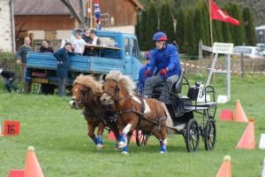 paire de poneys attelés sur épreuve de maniabilité combinée