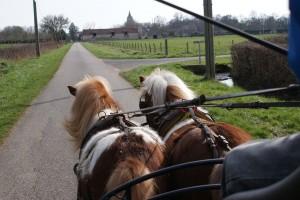 2 poneys attelés