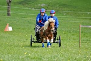 attelage à un poney en épreuve de maniabilité combinée