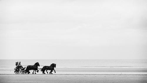 chevaux attelés en bord de mer