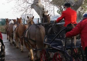 attelage multiple à 8 chevaux