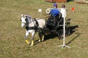 poney sur le test d'adresse, en concours d'attelage