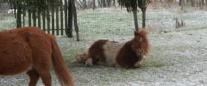 """""""Elle est pas belle la vie de poney, chez Gaëlle ?"""" (par Randy)"""