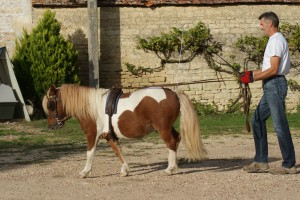 Belle attitude du poney et de son meneur : guides tendues et poney en avant