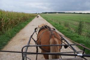 Détente au pas sur le chemin, avec Scotch au bout des guides.