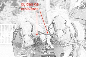Les croisières permettent de n'avoir en main, qu'une seule paire de guides.