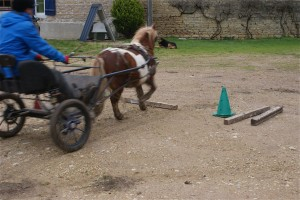 Pour réussir l'exercice, le poney doit être en avant, droit, et au milieu de la barre.
