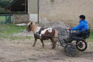 poney avec la tête en l'air, le dos creux et les postérieurs qui n'engagent plus.