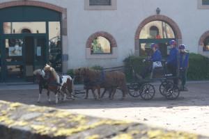 Attelage de 4 poneys se préparant à faire demi-tour dans une cour.