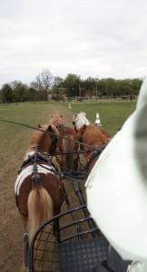 Vous ne pouvez pas me rater, je suis le seul poney des 4 qui se tortille...