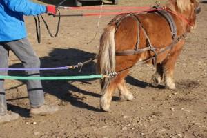 Apprendre la traction à un animal ne s'improvise pas, mais en suivant quelques règles, c'est accessible facilement.