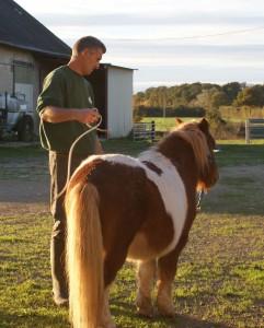 La désensibilisation est une étape cruciale pour les chevaux attelés.