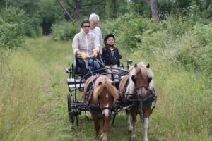 Promenade bucolique en famille avec les poneys attelés