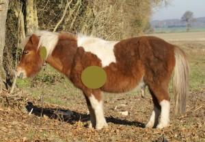 poney avec schéma des zones d'action