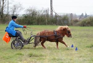 poney attelé au galop entre les quilles