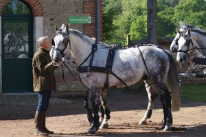 groom à la tête d'un attelage de 4 chevaux