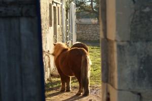 poney au soleil