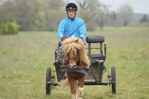 équipage attelé à un poney, doublant face au jury