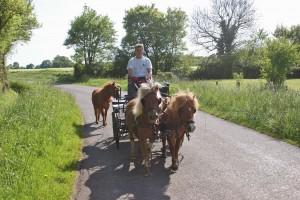 3 poneys, un attelage en promenade