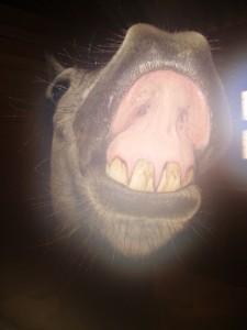sourire de poney de toutes ses dents !