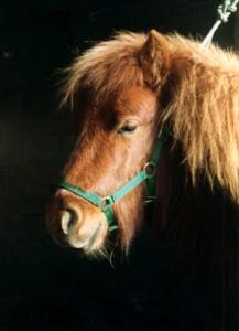 portrait d'Ernest petit poney