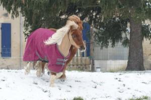 La couverture imperméable Horseware amigo Hero6 sur le poney au galop