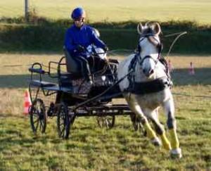 Niko le poney clown attelé, lors d'un concours